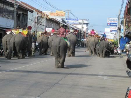 150morejoinin.jpg /Surin...The Elephant Festival pix/N.E. Thailand Motorcycle Trip Report Forums/  - Image by: