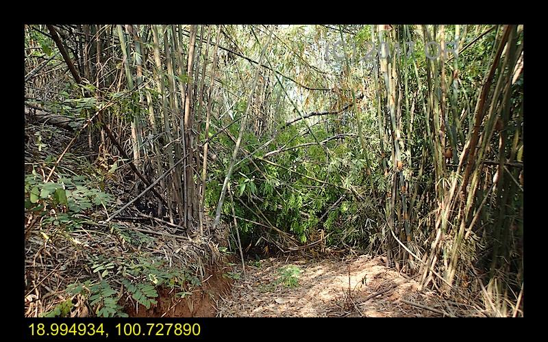 2017-4 Nanthaburi NP 12.jpg