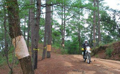 23020318-S.jpg in The MHS Loop: Checking Dirt Roads  Trails from  DavidFL at GT-Rider Motorcycle Forums