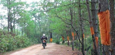 23020319-S.jpg in The MHS Loop: Checking Dirt Roads  Trails from  DavidFL at GT-Rider Motorcycle Forums