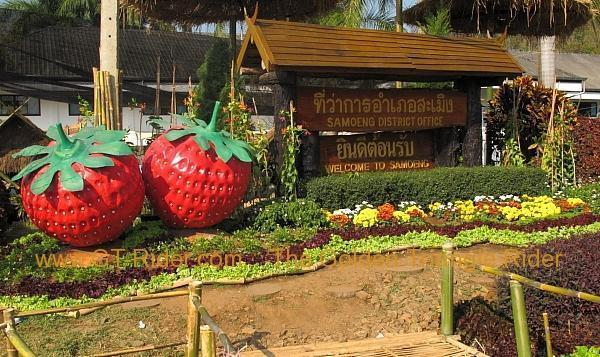 276322=8637-img_0060.jpg /Samoeng Strawberry Festival  2012./Touring Northern Thailand - Trip Reports Forum/  - Image by: