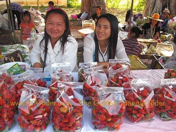 276322=8639-img_0054.jpg /Samoeng Strawberry Festival  2012./Touring Northern Thailand - Trip Reports Forum/  - Image by: