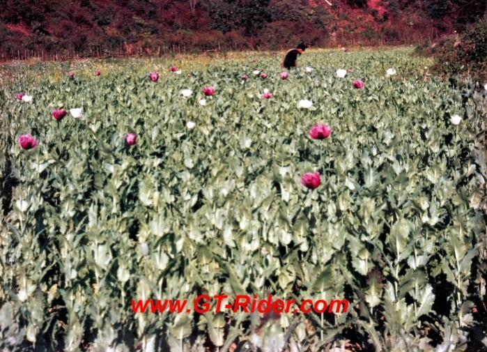 291218=16194-GTR-Opium-Laos95-C.