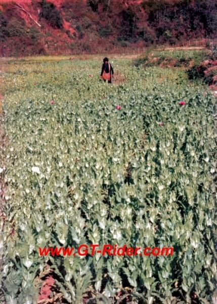 291218=16195-GTR-Opium-Laos95-D.