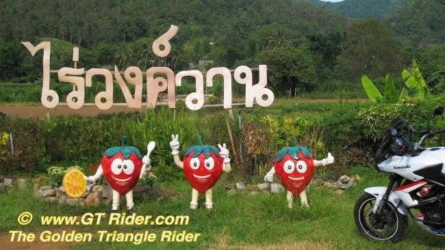 291604=16301-IMG_6309.jpg /Samoeng Strawberry Festival  2012./Touring Northern Thailand - Trip Reports Forum/  - Image by: