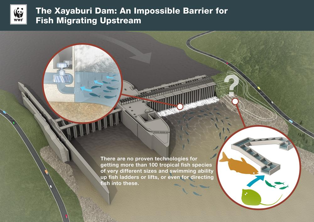 299888=19457-xayaburi_dam_fish_migration_upstream_impacts.