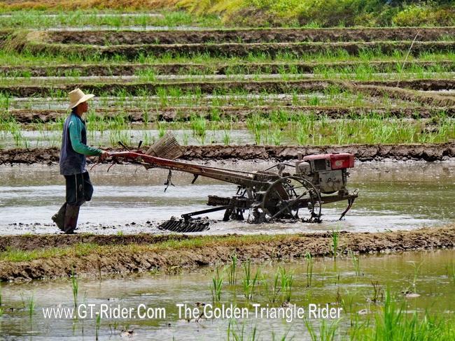 300391=19802-GTR-PiangLuang-01.