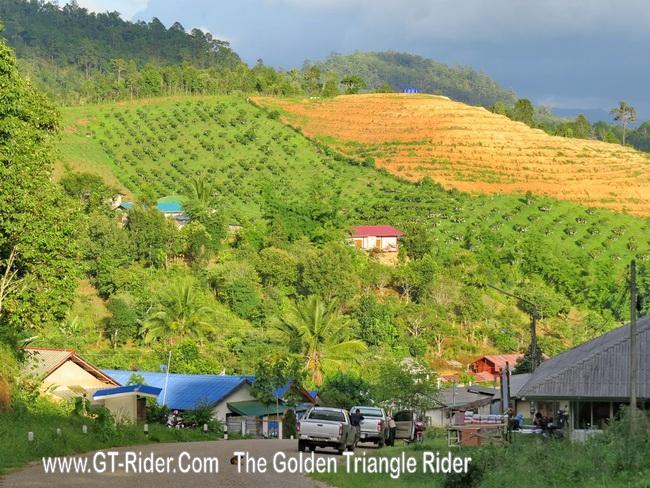 300435=19877-GTR-PiangLuang-05.