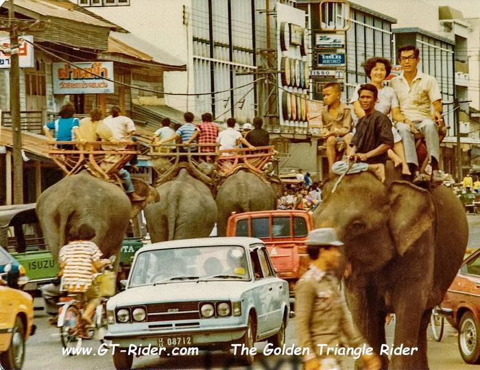 305312=22168-GTR-Surin-Elephant-02.