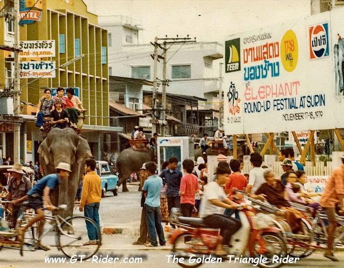 305312=22169-GTR-Surin-Elephant-01.