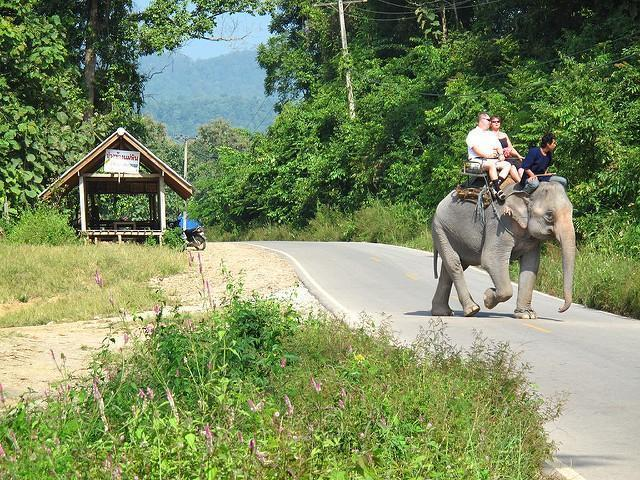 5161257020_3785c6809c_z.jpg /Doi Inthanon picture tour from the other side, no  fee/Touring Northern Thailand - Trip Reports Forum/  - Image by: