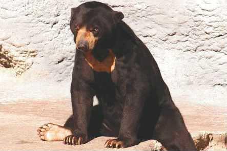 bear_sun_zps4a639b61.