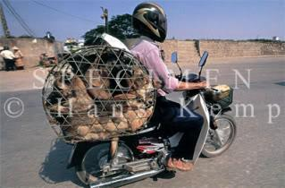 bike_burden-dogs.