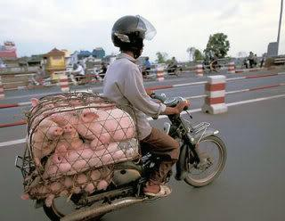 bike_burden-piglets.