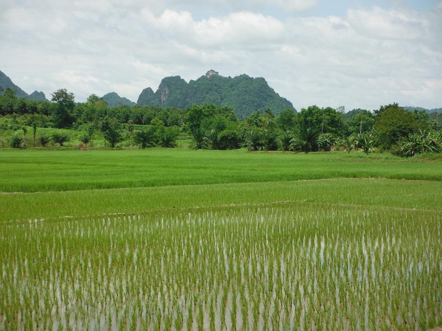 Chiang Rai  (1).JPG