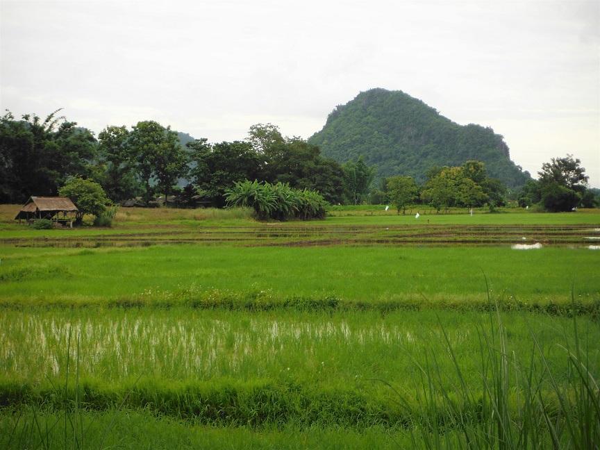 Chiang Rai Wawi Dirt Ride (1).JPG