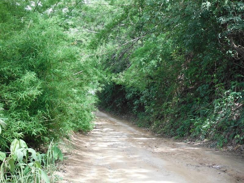 ChiangRai-DoiMaeSalong4.