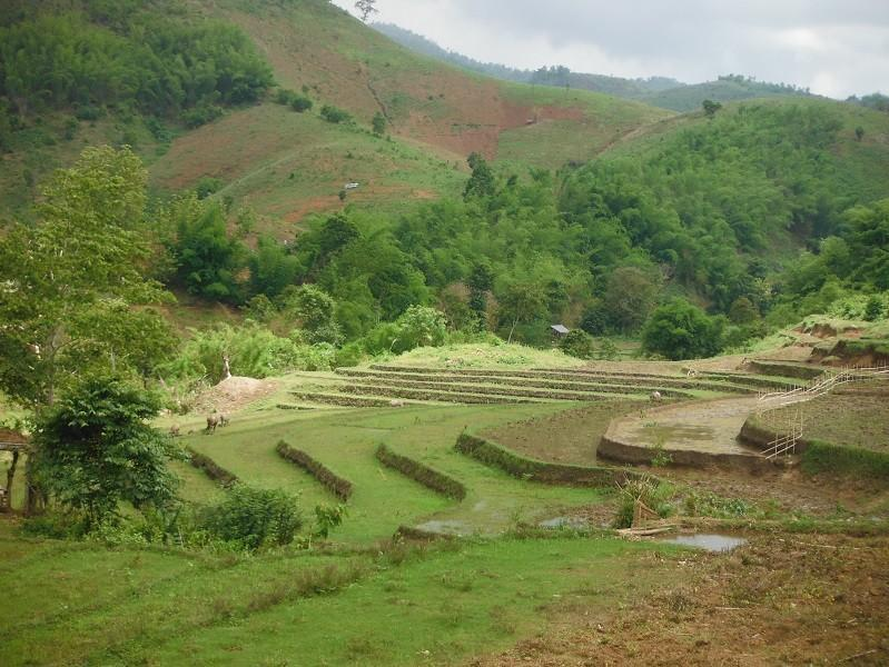 ChiangRai-DoiMaeSalong8.