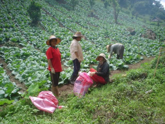 ChiangRai2054.jpg