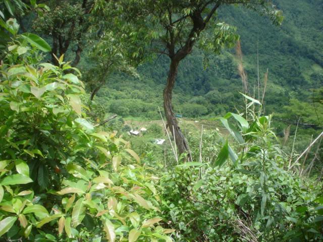 ChiangRai2069.jpg