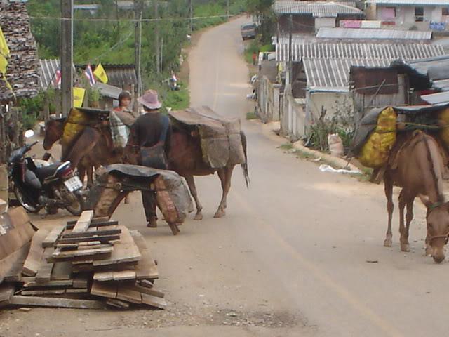 ChiangRai2082.jpg