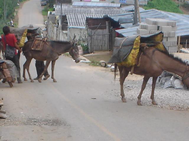 ChiangRai2083.jpg