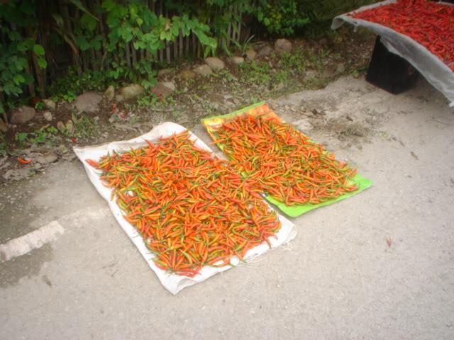 ChiangRai2113.jpg