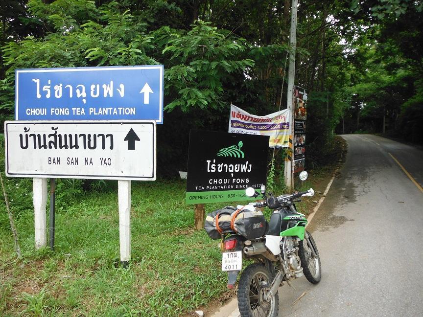 Choui Fong Tea Plantation Chiang Rai (1).JPG