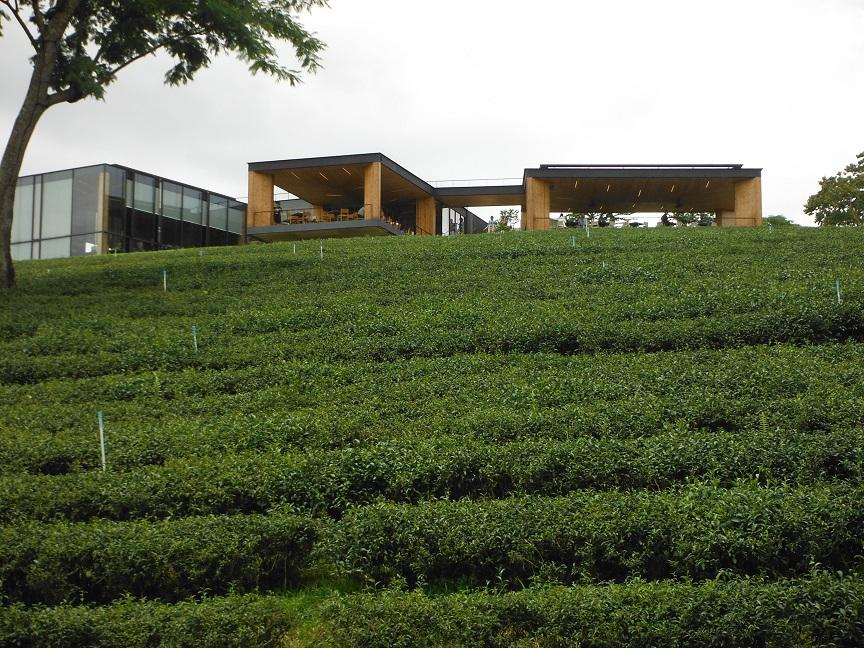 Choui Fong Tea Plantation Chiang Rai (12).JPG