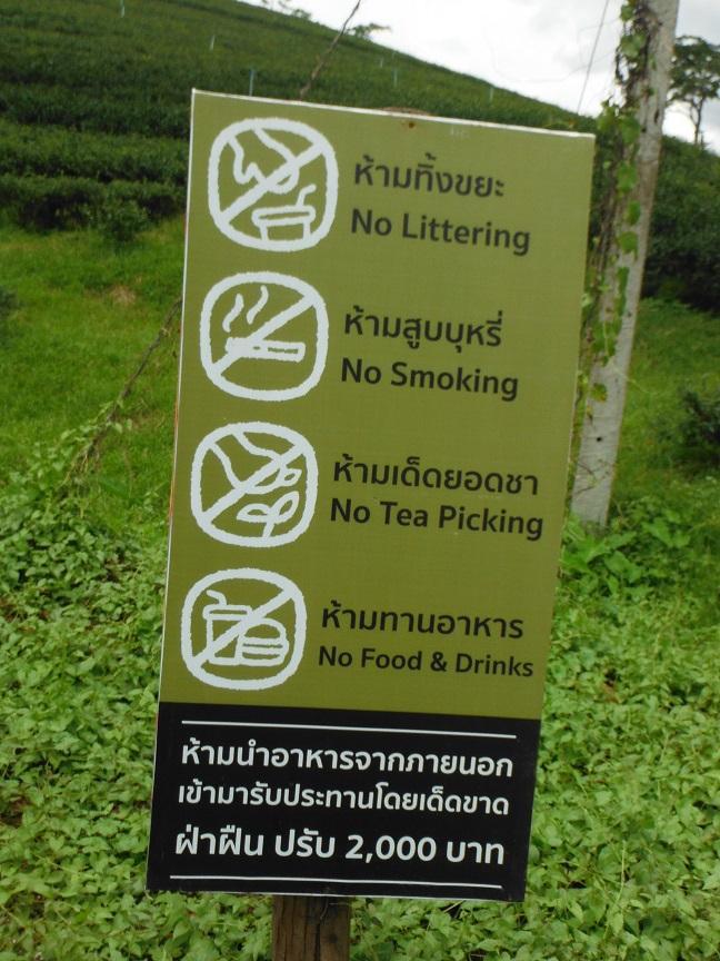 Choui Fong Tea Plantation Chiang Rai (13).JPG