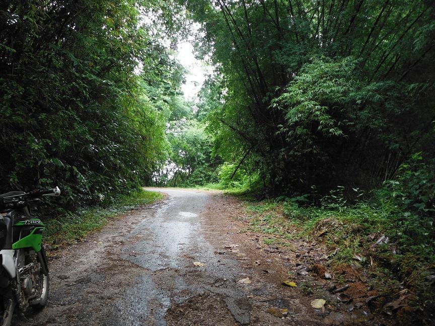 Choui Fong Tea Plantation Chiang Rai (16).JPG