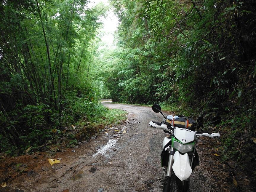 Choui Fong Tea Plantation Chiang Rai (17).JPG