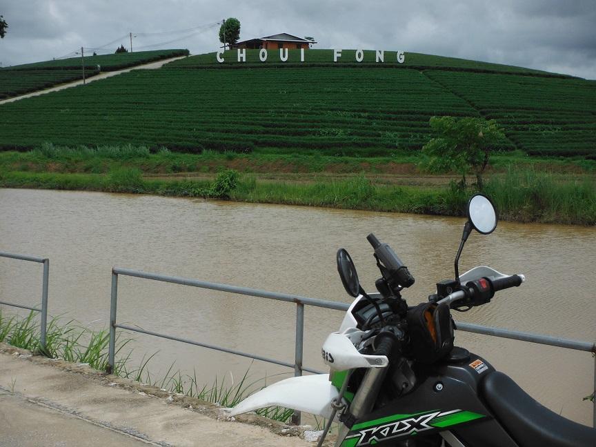 Choui Fong Tea Plantation Chiang Rai (2).JPG
