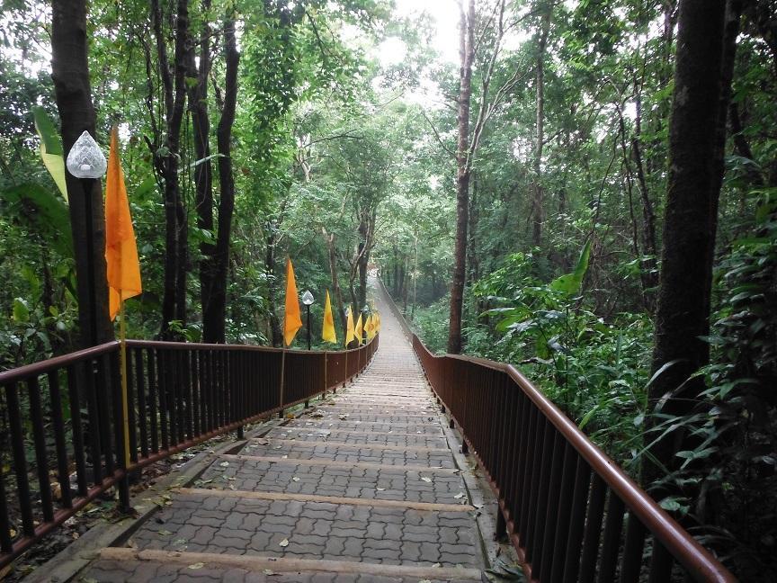 Choui Fong Tea Plantation Chiang Rai (26).JPG