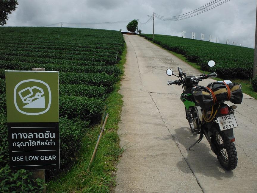 Choui Fong Tea Plantation Chiang Rai (4).JPG