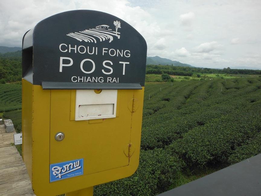 Choui Fong Tea Plantation Chiang Rai (9).JPG