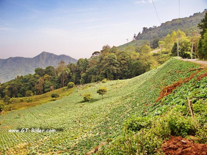 CRW_2273.CRW.jpg /1216, a hidden Pearl in Nan?/Touring Northern Thailand - Trip Reports Forum/  - Image by: