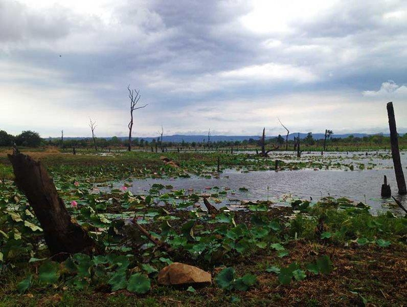 dirt-bike-tours-cambodia-forest-flooded.