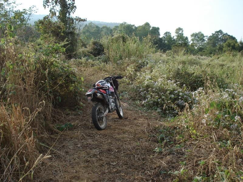 DSC00905.jpg /offf-road to doi pui and mountain bike trails/Touring Northern Thailand - Trip Reports Forum/  - Image by: