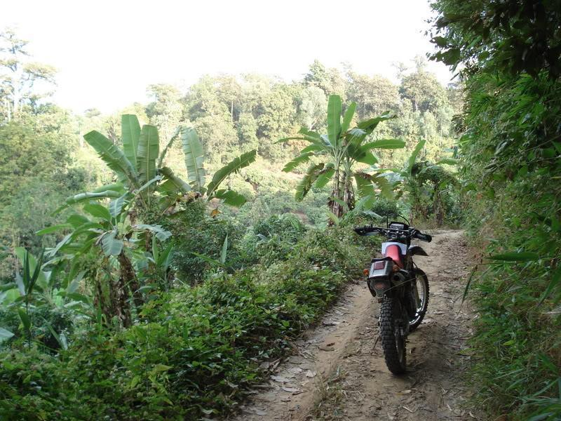 DSC00916.jpg /offf-road to doi pui and mountain bike trails/Touring Northern Thailand - Trip Reports Forum/  - Image by: