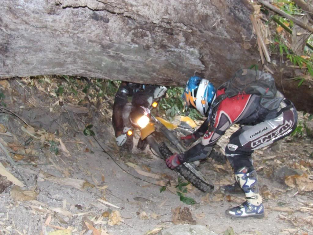 DSCF5190.jpg /Some fun in the jungle.../Touring Northern Thailand - Trip Reports Forum/  - Image by: