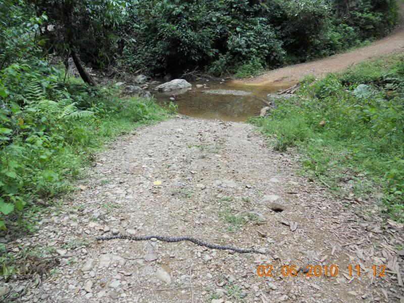 DSCN0269.jpg /LAOS, moto-rex/dirthonk additional photos./Laos Road  Trip Reports/  - Image by: