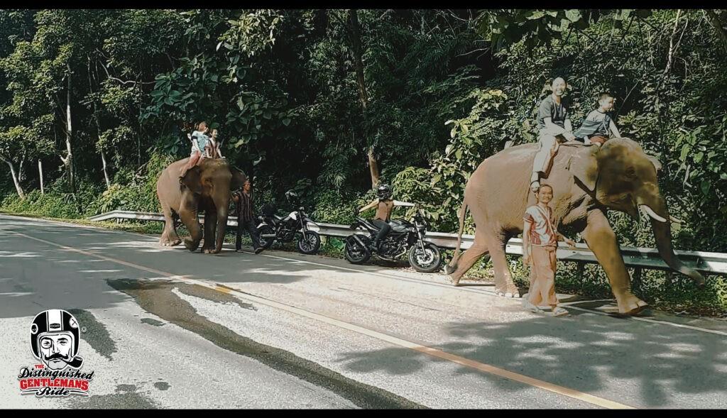 elephant-1024x589.