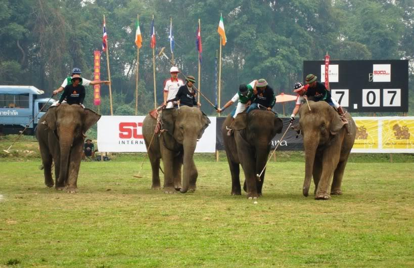 ElephantPolo.jpg /Surin...The Elephant Festival pix/N.E. Thailand Motorcycle Trip Report Forums/  - Image by: