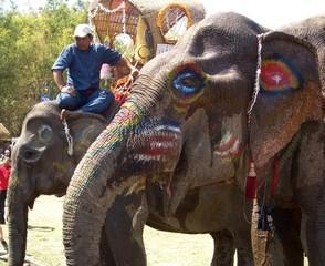 elephantprofile.