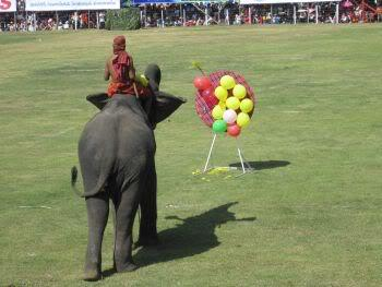 Elephanttricks.jpg /Surin...The Elephant Festival pix/N.E. Thailand Motorcycle Trip Report Forums/  - Image by: