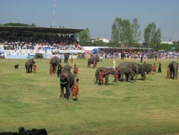 Elephanttricks1.jpg /Surin...The Elephant Festival pix/N.E. Thailand Motorcycle Trip Report Forums/  - Image by: