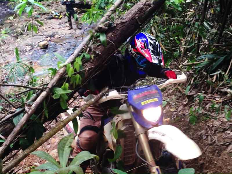 enduro-tours-cambodia-tree.