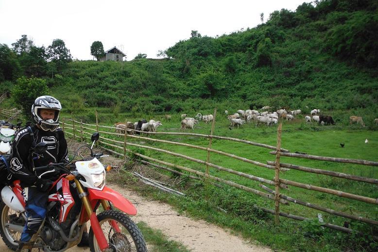 Fang Thailand Motorcycle (17).JPG