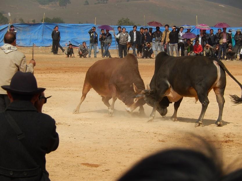 HmongNewYearLaos7.